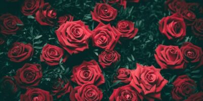 8 Astounding Tips to Choose the Best Florist at Your Budget !!